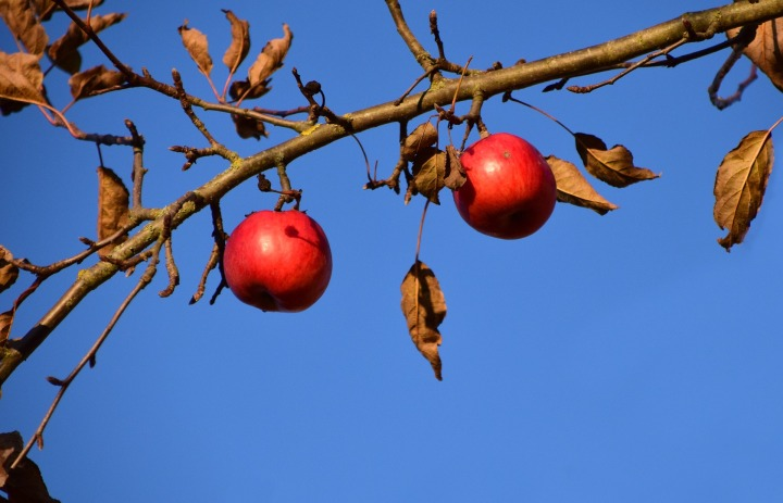 apple-1882599_1920