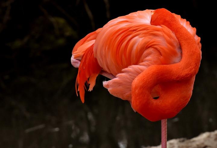 flamingo-3322280_1920
